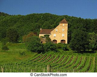 House, Vine, vineyard