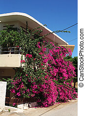 house with beautiful pink flowers