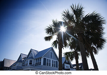 House with palms.