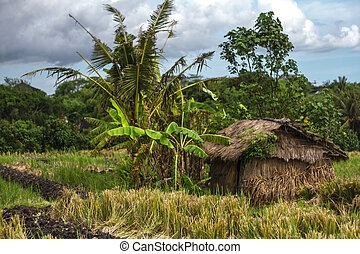 House with thatched roof in a field