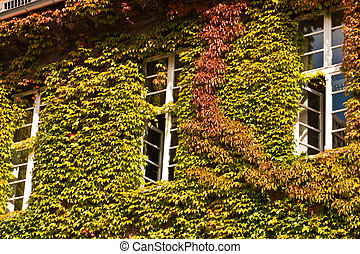 house with Virginia creeper