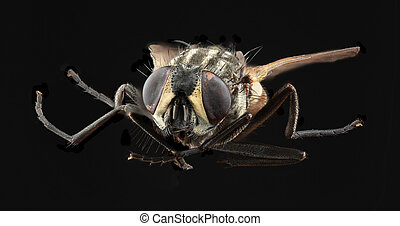 Housefly Cutout