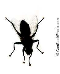 Housefly sticked on a window against white background
