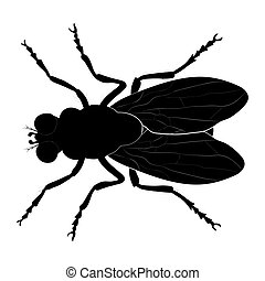 Housefly silhouette isolated on white background.