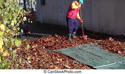Housekeeper man raking autumn leaves on canvas. Yard guard care environment cleanment. Gimbal motion shot.