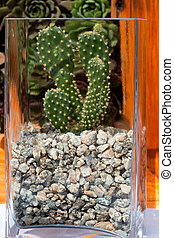 houseplant cactus grows in a glass container