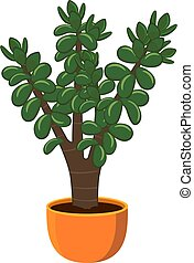Houseplant Crassula ovata in a pot isolated on white background vector illustration