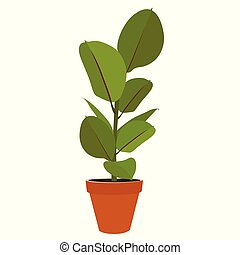 Houseplant Ficus potted plant - Houseplant - young Ficus ...