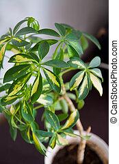 Houseplant - Green houseplant in a pot