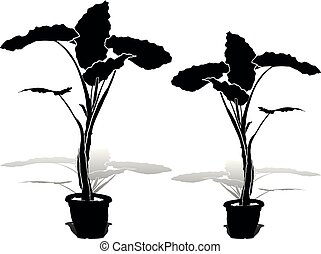 Houseplant high, silhouette on white background, vector