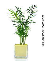 Houseplant in glass pot isolated on white background.