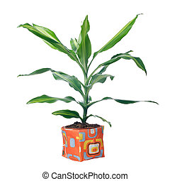 Houseplant in modern plastic pot isolated on white ...