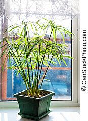 houseplant, pot fleurs, vert