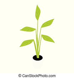 Houseplant potted plant. Garden potted plants. Vector potted...