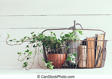 siphon and books - Houseplant, vintage siphon and books in...