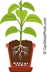 Houseplant with roots icon - Houseplant icon showing roots...