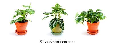 houseplants, assorti