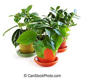 houseplants, dobrany