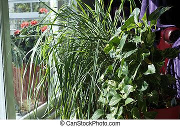 Houseplants in a Sunny Living Room Window