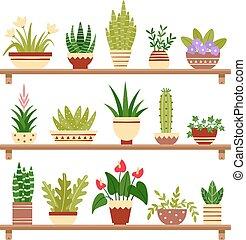 Houseplants on shelf. Flower in pot, potted houseplant and plant pots. Home plants on shelves isolated vector illustration