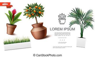 houseplants, realistyczny, szablon