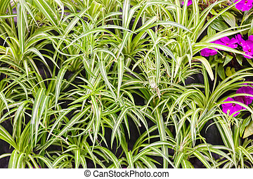 houseplants - type of room plants with specific leaf, note ...