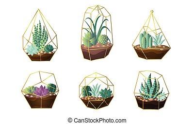 houseplants, vettore, illustrazione, set, otri, verde