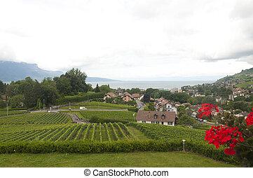 Houses amidst vineyards in Vevey, Switzerland