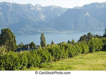 Houses by Lake Geneva in Vevey, Switzerland