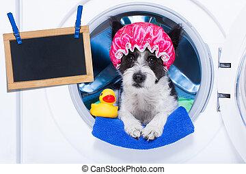 housework, cão, afazeres
