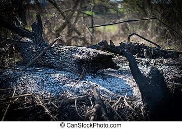 hout, aangebrand