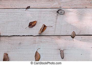 hout, achtergrond, blad