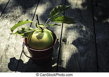 hout, appel