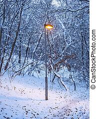 hout, kleine, lightpost, park