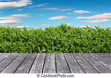 hout, tafel, op, gras, achtergrond