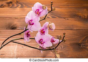 houten, bloemen, achtergrond, orchidee