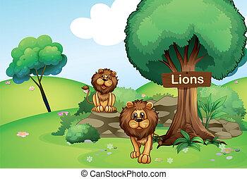 houten, leeuwen, signboard, twee, bos