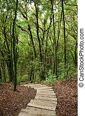 houten, stappen, bos, tree