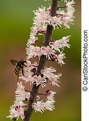 Hoverfly on flower stem