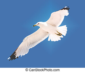 A seagull hovers in the sky over a beach