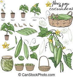 How to grow cucumbers. Isolated fresh vegetables, different...