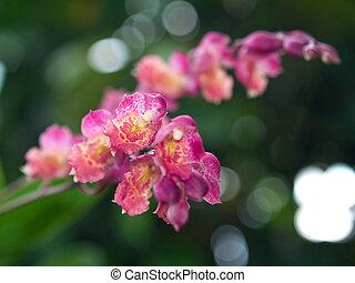 Howeara Lava Burst - Beautiful bouquet flower of Howeara...