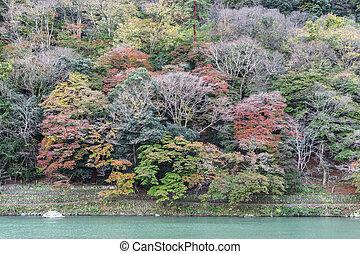 Hozu river in Arashiyama area in autumn, Kyoto, Japan
