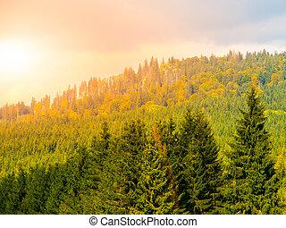 hromada čeho páteř, čech, hory, stozec, sumava, top., republika, les, balvan, krajina