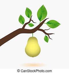 hruška, a, filiálka, o, strom, s, mladický list, eps10
