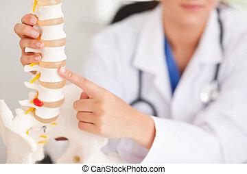 hueso, doctor, señalar, espina dorsal