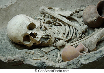 huesos, cráneo