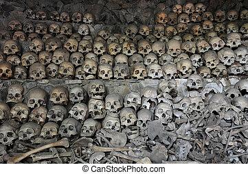 huesos, cráneos