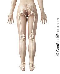 huesos, hembra, pierna