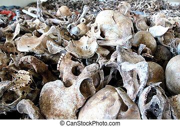 huesos, humano